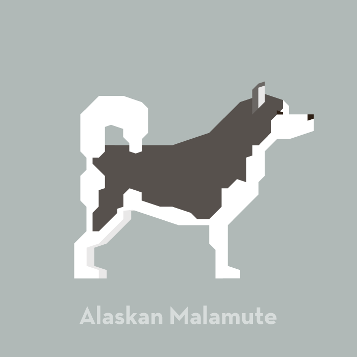 illustration-dog-alaskan-malamute