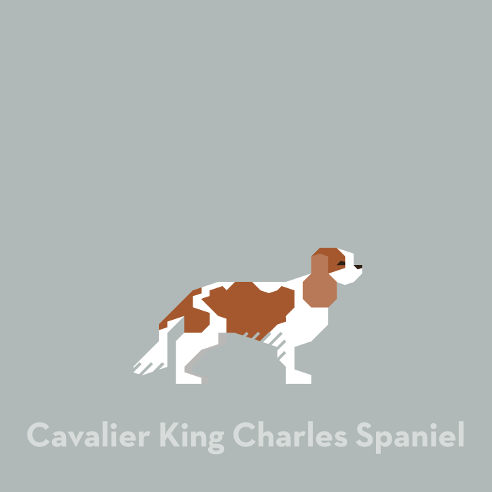 illustration-dog-cavalier-king-charles-spaniel