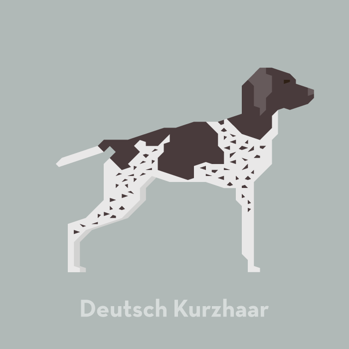 illustration-dog-deutsch-kurzhaar