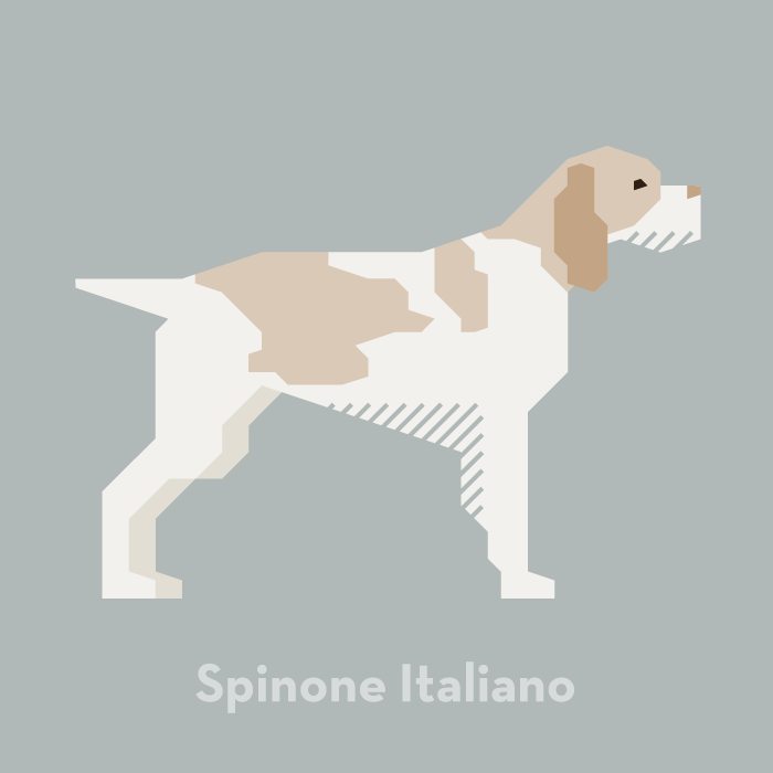illustration-dog-spinone-italiano